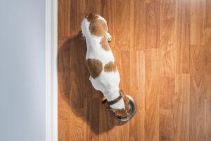 hardwood floor maintenance tips GoBros